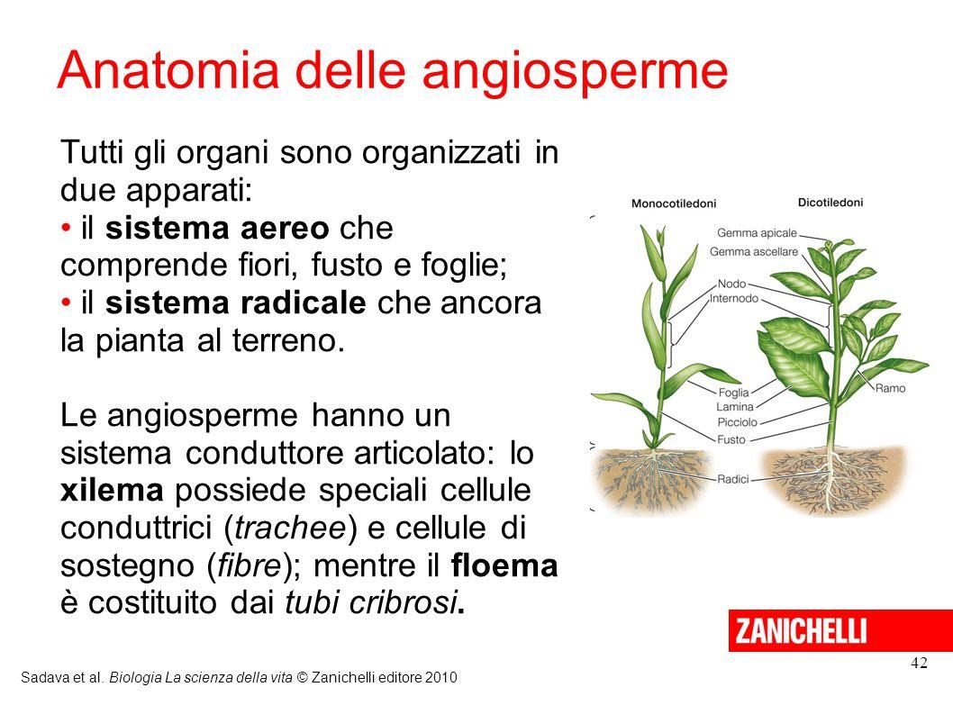 Anatomia delle angiosperme Sadava et al. Biologia La scienza della vita © Zanichelli editore 2010 42 Tutti gli organi sono organizzati in due apparati