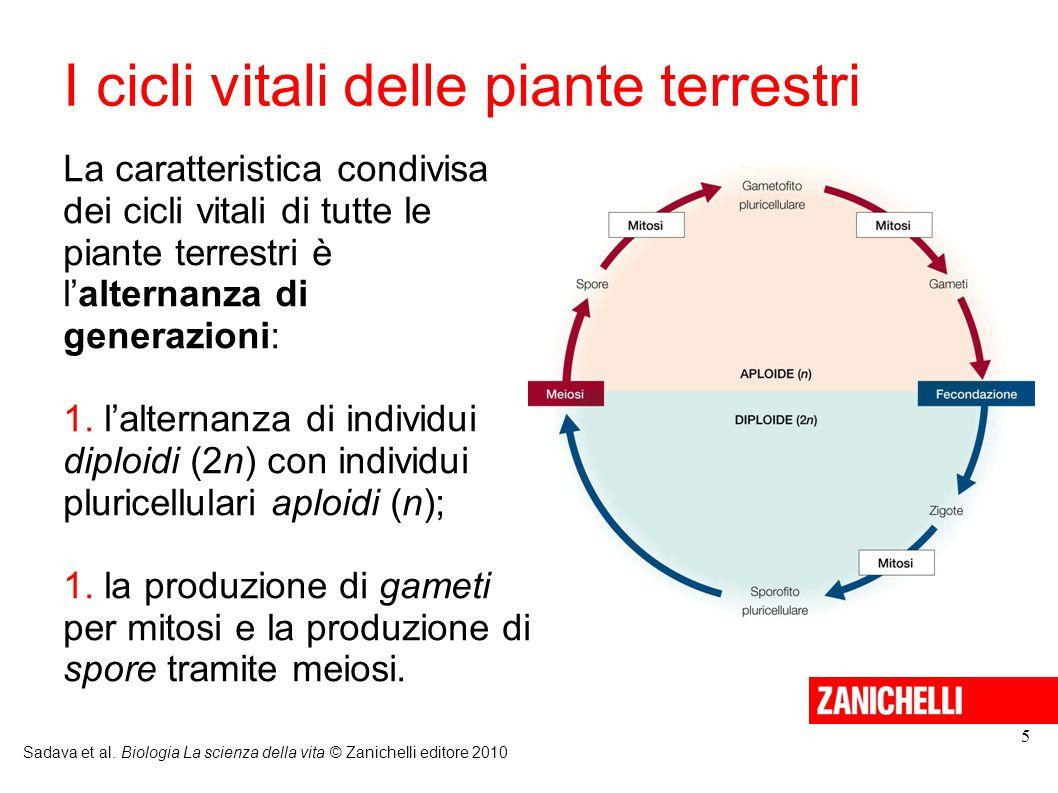 I cicli vitali delle piante terrestri Sadava et al. Biologia La scienza della vita © Zanichelli editore 2010 5 La caratteristica condivisa dei cicli v