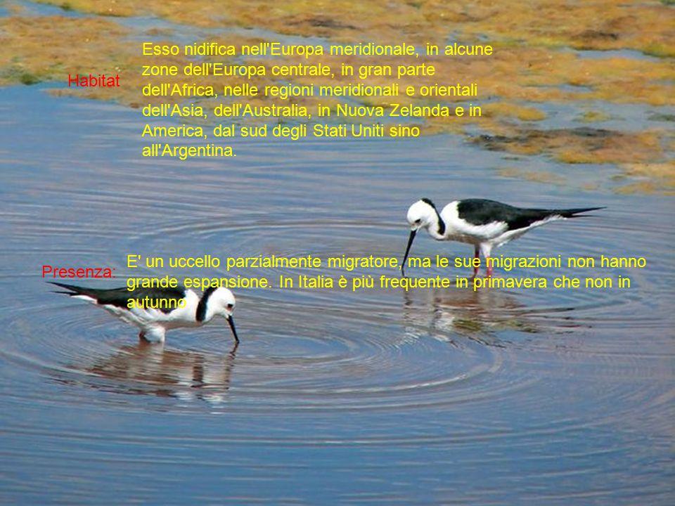 Habitat Presenza: Esso nidifica nell Europa meridionale, in alcune zone dell Europa centrale, in gran parte dell Africa, nelle regioni meridionali e orientali dell Asia, dell Australia, in Nuova Zelanda e in America, dal sud degli Stati Uniti sino all Argentina.