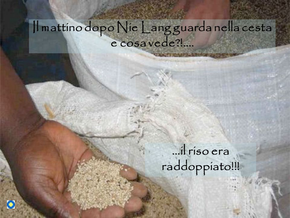 Il mattino dopo Nie Lang guarda nella cesta e cosa vede !.... …il riso era raddoppiato!!!
