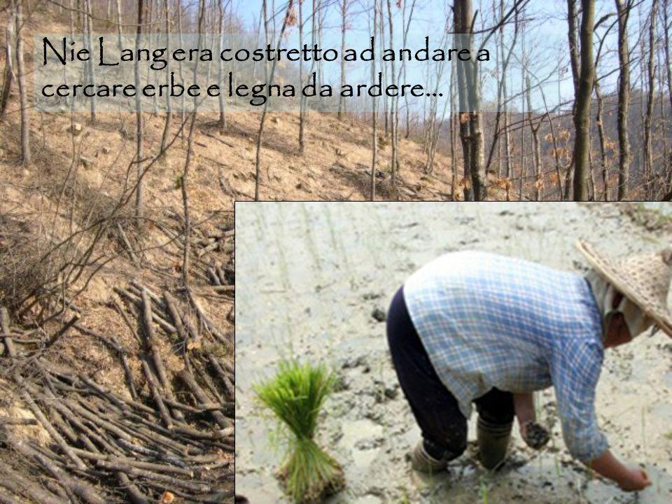 Nie Lang era costretto ad andare a cercare erbe e legna da ardere…