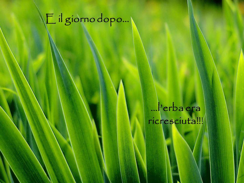 E il giorno dopo… …l'erba era ricresciuta!!!