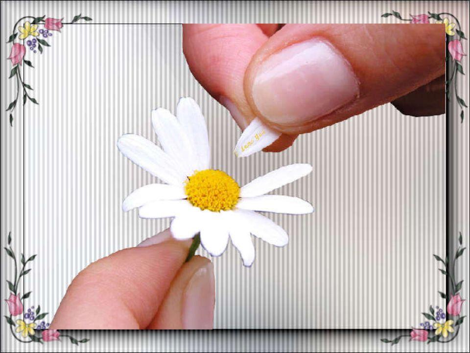 Cogli la rosa quando è il momento, che il tempo, lo sai, vola e lo stesso fiore che sboccia oggi, domani appassirà. Gerard Pitts