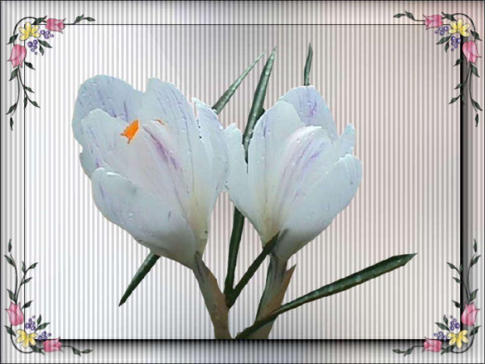 Siedi tra l'erbe e i fiori e ai freschi venti Dai la dolce e pensosa alma in balia.