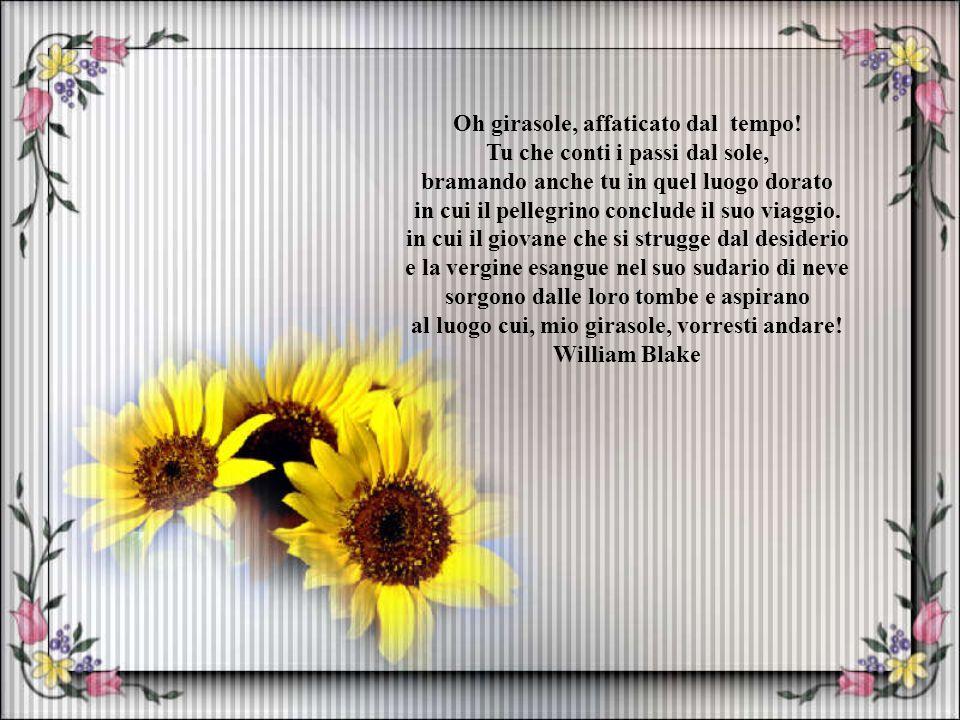 Fiore eterno. Supplica del sospiro. fiore grandioso, divino, snervante, fiore di fauno e di vergine cristiana, fiore di Venere furiosa e tonante, fior