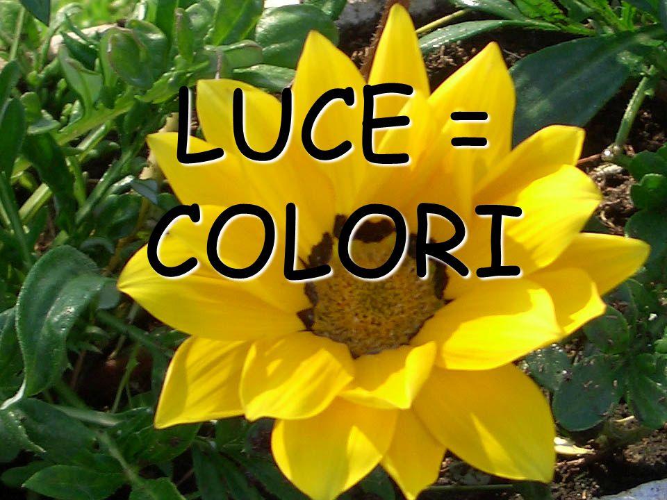 LUCE = COLORI