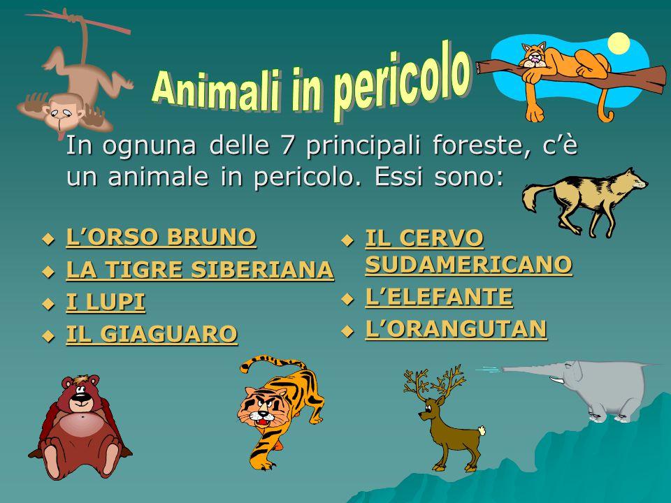 SOS ANIMALI IN PERICOLO Animali in estinzione nelle grandi foreste
