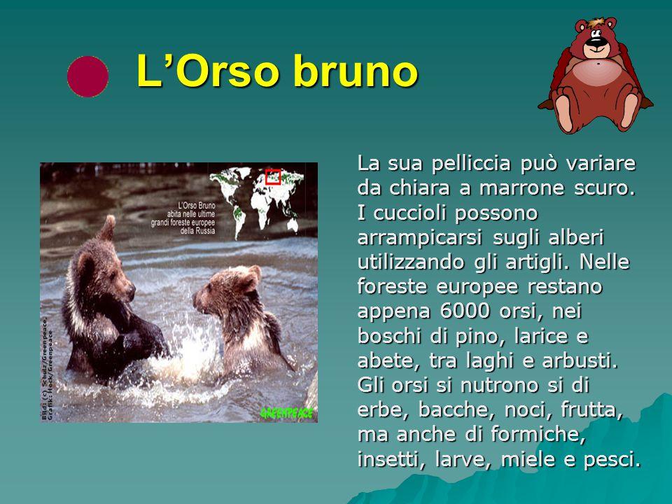 In ognuna delle 7 principali foreste, c'è un animale in pericolo. Essi sono:  L'ORSO BRUNO L'ORSO BRUNO L'ORSO BRUNO  LA TIGRE SIBERIANA LA TIGRE SI