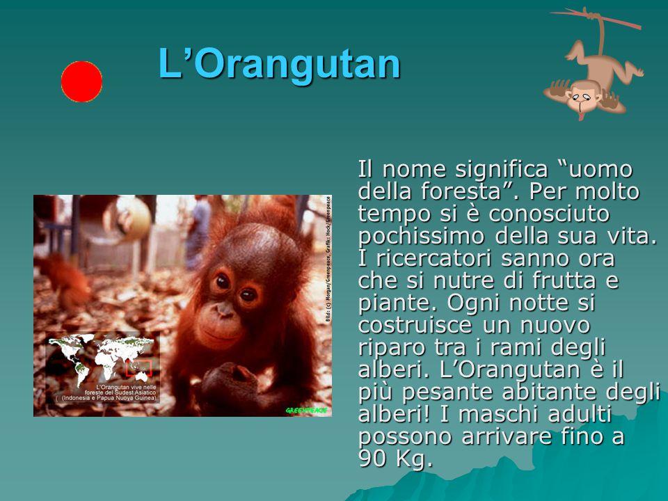 L'elefante Da quando è stato proibito il commercio delle sue zanne per ricavarne l'avorio, la maggiore minaccia per questo elefante viene dalla distruzione delle foreste che abita.