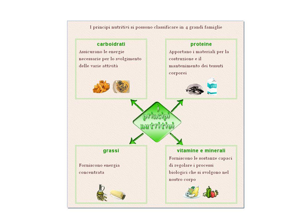 Eterotrofi Organismi che si alimentano a spese di altri per ricavare sostanze organiche (es. altri protozoi e animali). Autotrofi Organismi che sintet