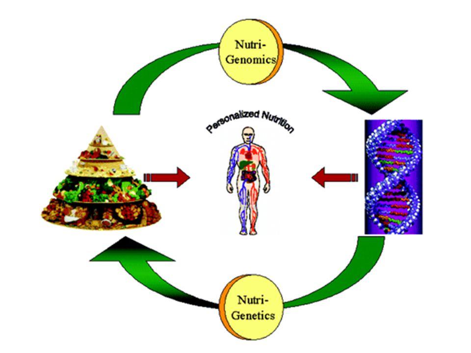 IMPORTANZA DEL CIBO PER IL NOSTRO CORPO Se ci si alimenta correttamente il corpo ne trae un grande beneficio e così aumentano notevolmente le possibil