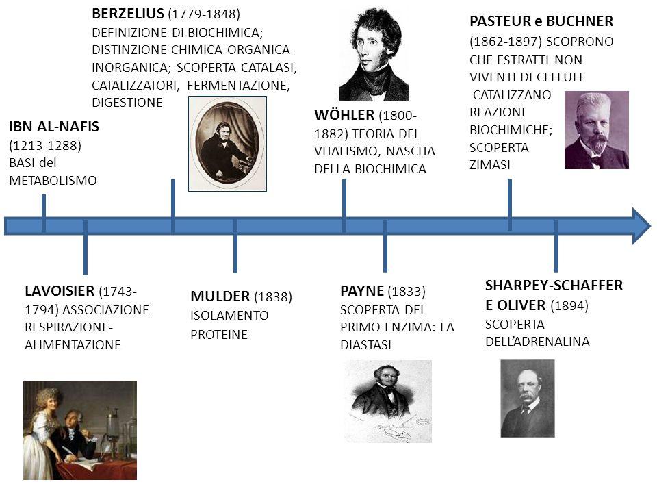 IBN AL-NAFIS (1213-1288) BASI del METABOLISMO LAVOISIER (1743- 1794) ASSOCIAZIONE RESPIRAZIONE- ALIMENTAZIONE BERZELIUS (1779-1848) DEFINIZIONE DI BIOCHIMICA; DISTINZIONE CHIMICA ORGANICA- INORGANICA; SCOPERTA CATALASI, CATALIZZATORI, FERMENTAZIONE, DIGESTIONE MULDER (1838) ISOLAMENTO PROTEINE WÖHLER (1800- 1882) TEORIA DEL VITALISMO, NASCITA DELLA BIOCHIMICA PAYNE (1833) SCOPERTA DEL PRIMO ENZIMA: LA DIASTASI PASTEUR e BUCHNER (1862-1897) SCOPRONO CHE ESTRATTI NON VIVENTI DI CELLULE CATALIZZANO REAZIONI BIOCHIMICHE; SCOPERTA ZIMASI SHARPEY-SCHAFFER E OLIVER (1894) SCOPERTA DELL'ADRENALINA