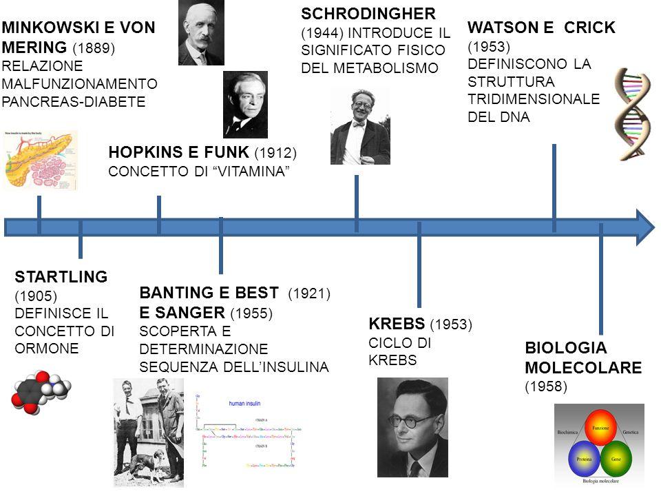 STARTLING (1905) DEFINISCE IL CONCETTO DI ORMONE MINKOWSKI E VON MERING (1889) RELAZIONE MALFUNZIONAMENTO PANCREAS-DIABETE BANTING E BEST (1921) E SANGER (1955) SCOPERTA E DETERMINAZIONE SEQUENZA DELL'INSULINA BIOLOGIA MOLECOLARE (1958) WATSON E CRICK (1953) DEFINISCONO LA STRUTTURA TRIDIMENSIONALE DEL DNA HOPKINS E FUNK (1912) CONCETTO DI VITAMINA SCHRODINGHER (1944) INTRODUCE IL SIGNIFICATO FISICO DEL METABOLISMO KREBS (1953) CICLO DI KREBS