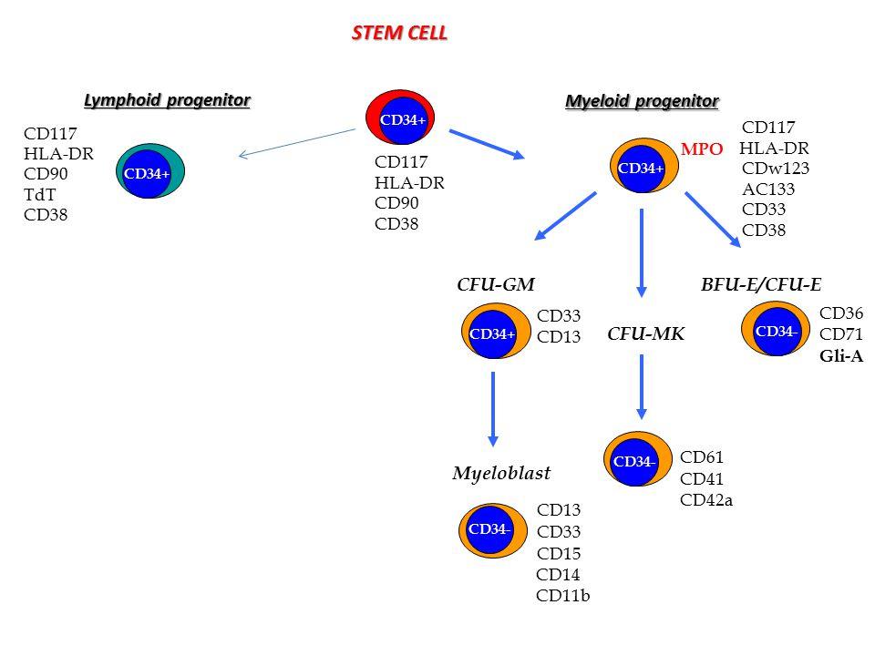 STEM CELL CD117 HLA-DR CD90 CD38 CD34+ Lymphoid progenitor CD34+ CD117 HLA-DR CD90 TdT CD38 CD117 HLA-DR CDw123 AC133 CD33 CD38 Myeloid progenitor CFU