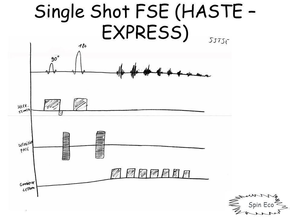 Single Shot FSE (HASTE – EXPRESS) Spin Eco