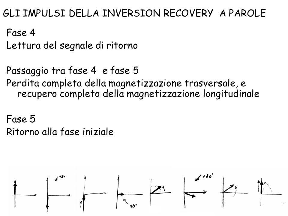 Fase 4 Lettura del segnale di ritorno Passaggio tra fase 4 e fase 5 Perdita completa della magnetizzazione trasversale, e recupero completo della magn