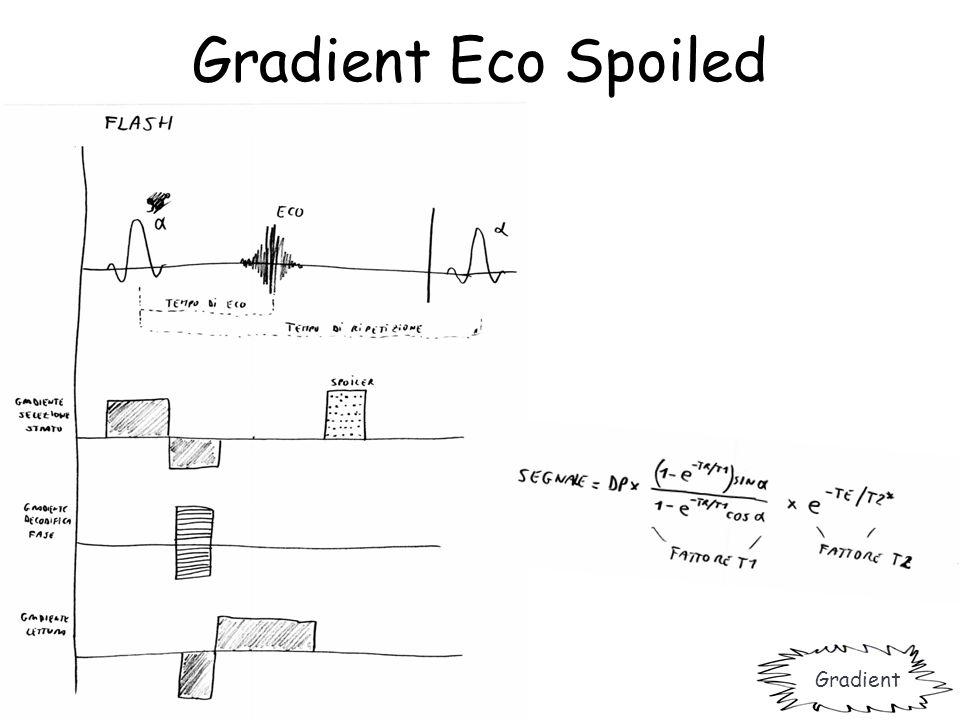 Gradient Eco Spoiled Gradient