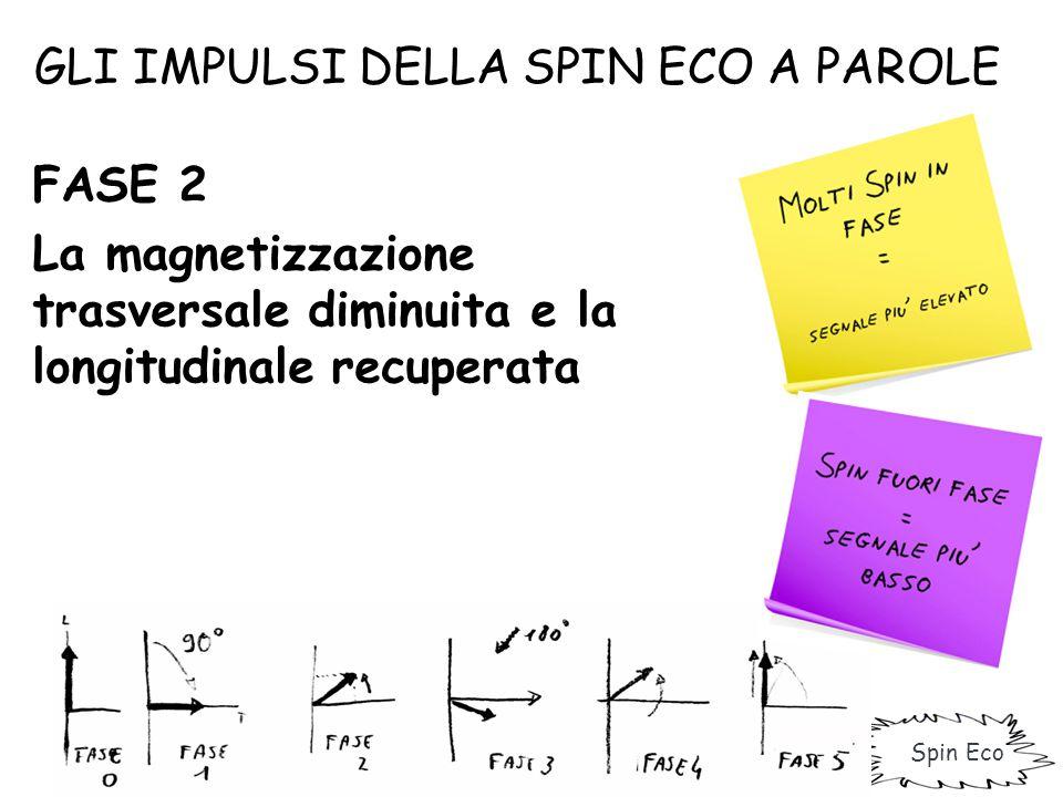 GLI IMPULSI DELLA SPIN ECO A PAROLE FASE 3 Viene inviato un impulso a 180° che va a rifocalizzare gli spin, con recupero della trasversale Fase 4 Nuova perdita della trasversale e recupero della longitudinale.