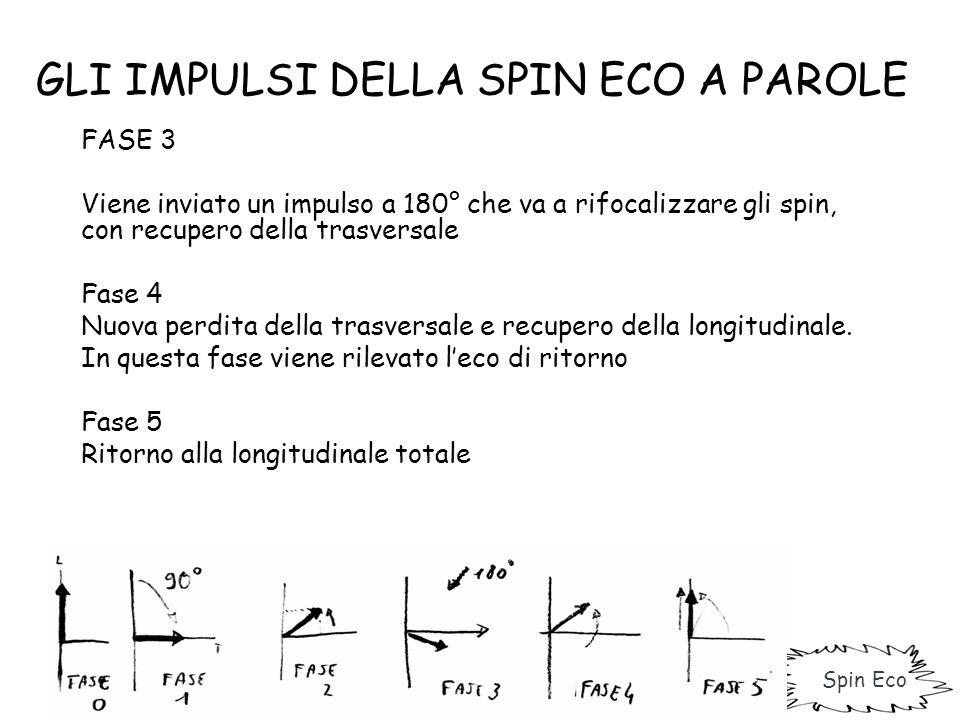 GLI IMPULSI DELLA SPIN ECO A PAROLE FASE 3 Viene inviato un impulso a 180° che va a rifocalizzare gli spin, con recupero della trasversale Fase 4 Nuov
