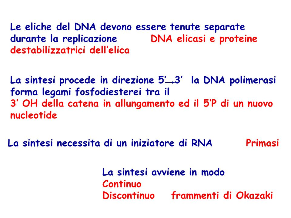 Le eliche del DNA devono essere tenute separate durante la replicazione DNA elicasi e proteine destabilizzatrici dell'elica La sintesi procede in dire