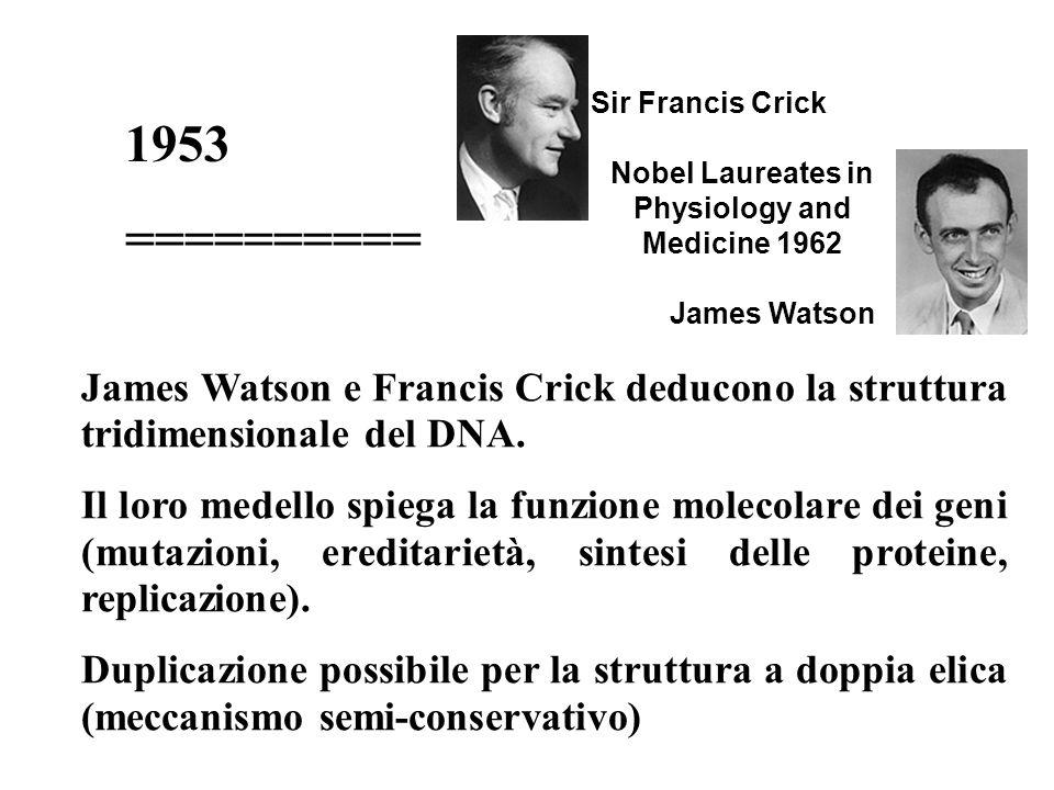 1953 ========== James Watson e Francis Crick deducono la struttura tridimensionale del DNA. Il loro medello spiega la funzione molecolare dei geni (mu