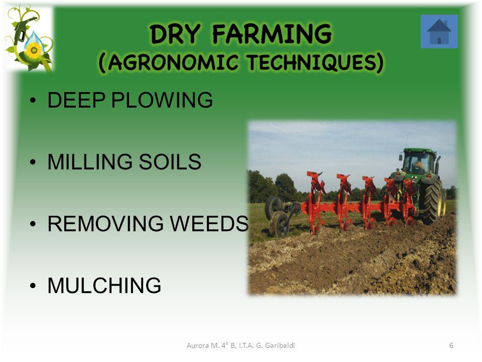 DEEP PLOWING MILLING SOILS REMOVING WEEDS MULCHING 6Aurora M. 4° B, I.T.A. G. Garibaldi