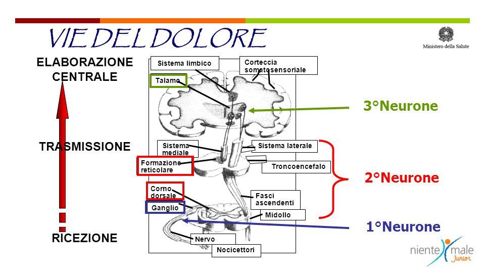 Sistema limbico Talamo Corteccia somatosensoriale Sistema mediale Formazione reticolare Sistema laterale Troncoencefalo Corno dorsale Ganglio Fasci as