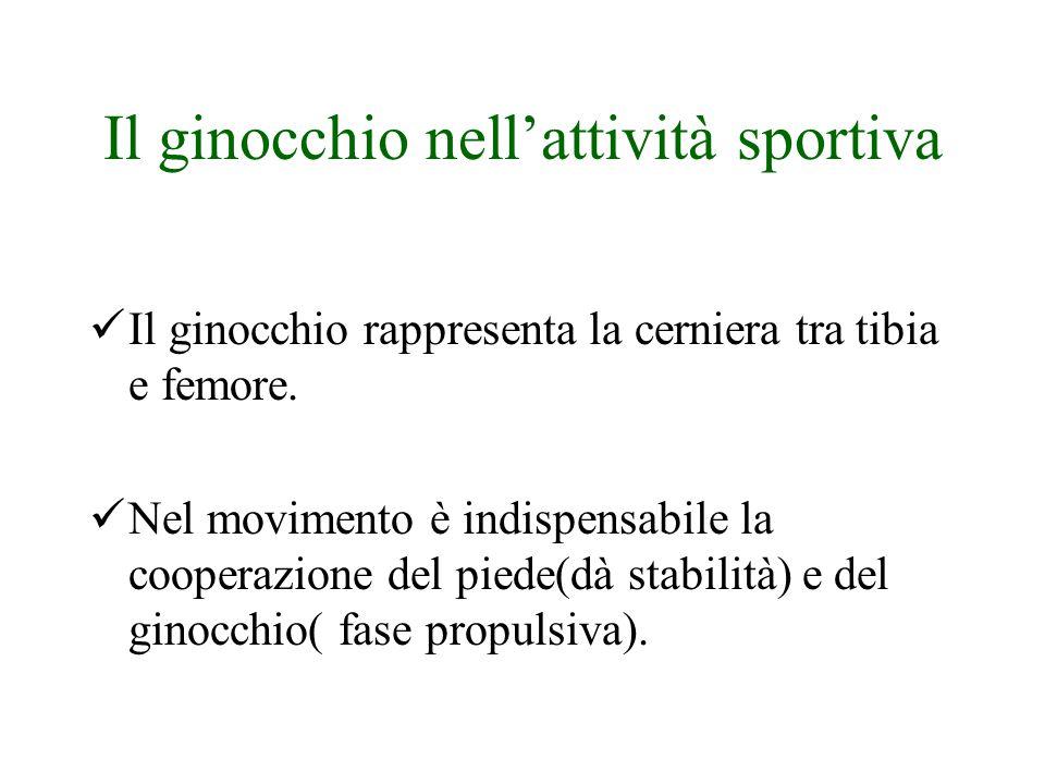 Il ginocchio nell'attività sportiva Il ginocchio rappresenta la cerniera tra tibia e femore.