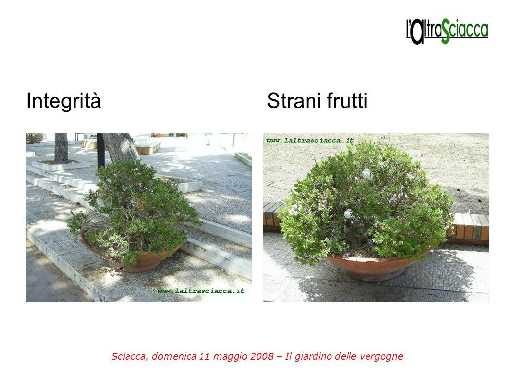 Sciacca, domenica 11 maggio 2008 – Il giardino delle vergogne Integrità Strani frutti