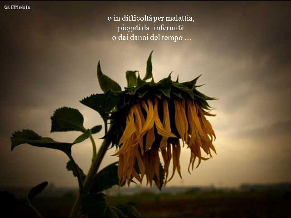 """A volte""""fiori"""" fragilissimi o sfortunati, costretti a farsi largo a fatica tra le spine della loro esistenza"""