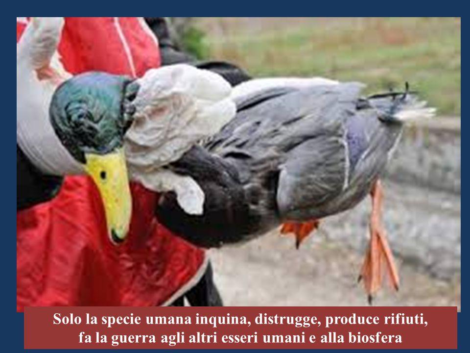 Solo la specie umana inquina, distrugge, produce rifiuti, fa la guerra agli altri esseri umani e alla biosfera