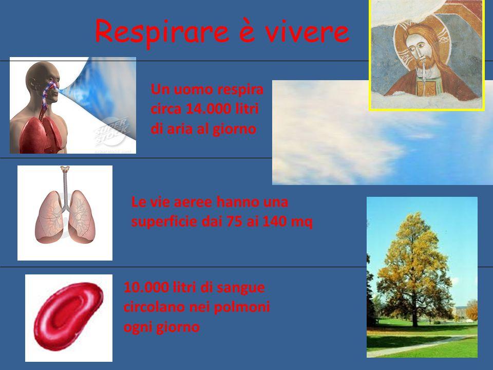 Respirare è vivere Le vie aeree hanno una superficie dai 75 ai 140 mq 10.000 litri di sangue circolano nei polmoni ogni giorno Un uomo respira circa 1
