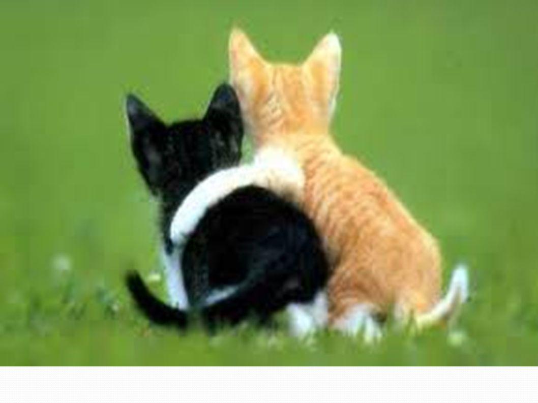 Compassione la parola compassione deriva dal latino Cum Patior che significa soffro con .
