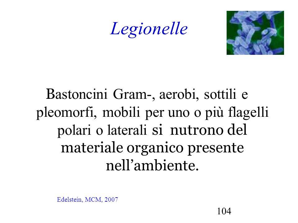104 Legionelle B astoncini Gram-, aerobi, sottili e pleomorfi, mobili per uno o più flagelli polari o laterali si nutrono del materiale organico prese
