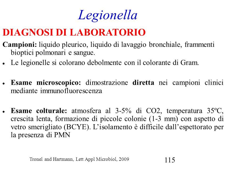 115 Legionella DIAGNOSI DI LABORATORIO Campioni: liquido pleurico, liquido di lavaggio bronchiale, frammenti bioptici polmonari e sangue. Le legionell