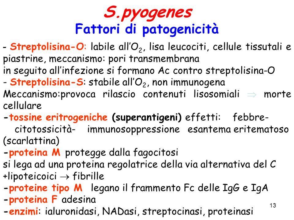 13 S.pyogenes Fattori di patogenicità - Streptolisina-O: labile all'O 2, lisa leucociti, cellule tissutali e piastrine, meccanismo: pori transmembrana