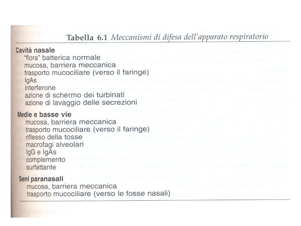 5 PMN è costituita per lo più da batteri È presente solo nel rinofaringe e tonsille medie-basse vie respiratorie si possono trovare m.i.