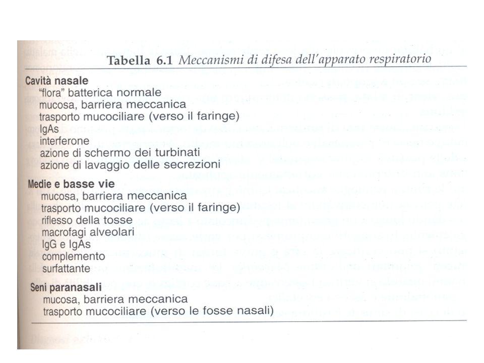 35 EMOFILI Piccoli bacilli Gram- pleiomorfi Anaerobi facoltativi Richiedono terreni supplementati (V e X) Colonizzano spesso il TRS durante i primi 5 mesi di vita