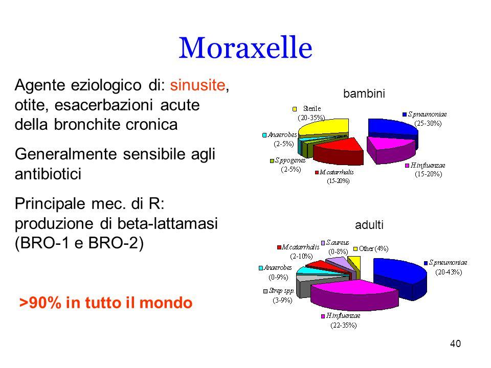 40 Moraxelle Agente eziologico di: sinusite, otite, esacerbazioni acute della bronchite cronica Generalmente sensibile agli antibiotici Principale mec