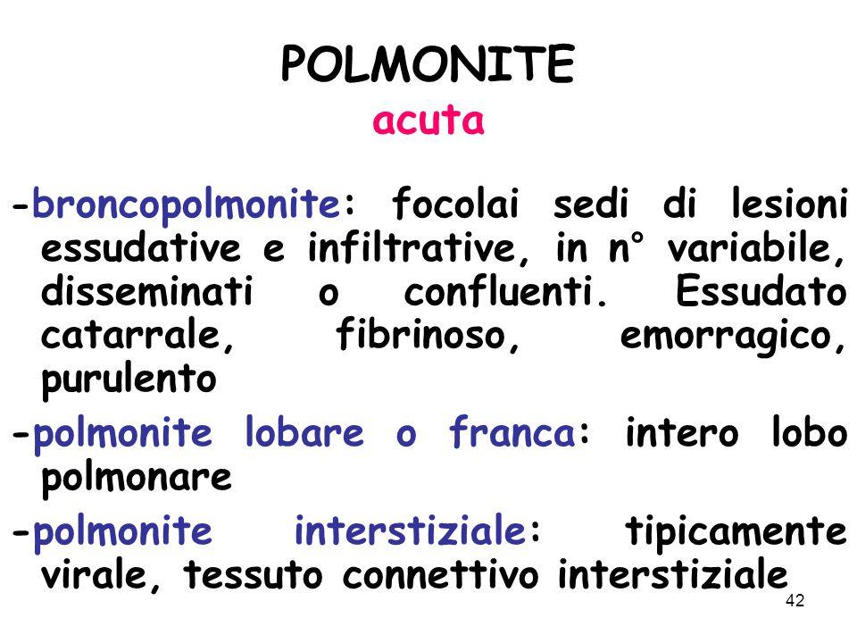 42 POLMONITE acuta - broncopolmonite: focolai sedi di lesioni essudative e infiltrative, in n° variabile, disseminati o confluenti.