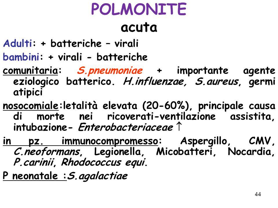 44 POLMONITE acuta Adulti: + batteriche – virali bambini: + virali - batteriche comunitaria: S.pneumoniae + importante agente eziologico batterico. H.