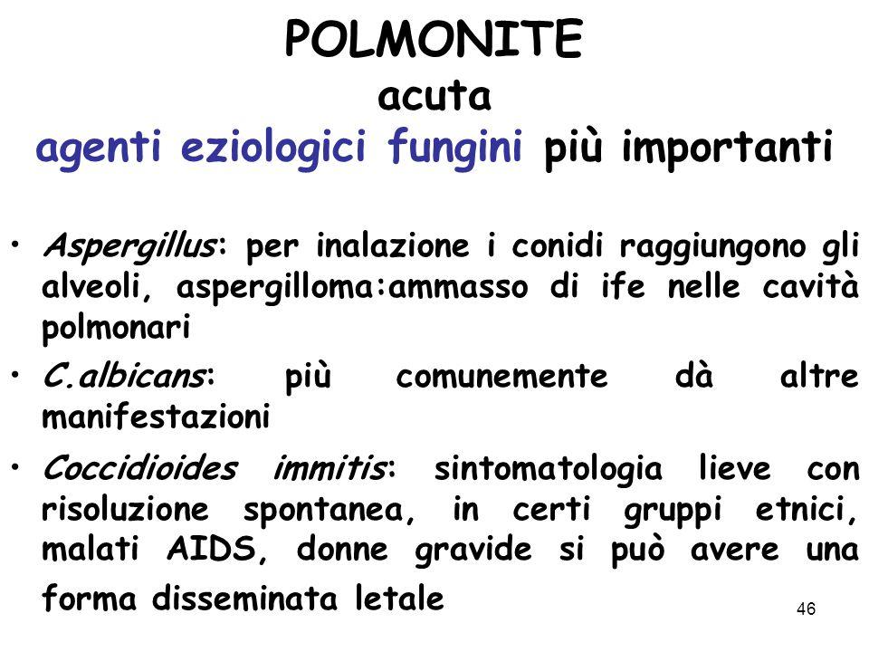 46 POLMONITE acuta agenti eziologici fungini più importanti Aspergillus: per inalazione i conidi raggiungono gli alveoli, aspergilloma:ammasso di ife