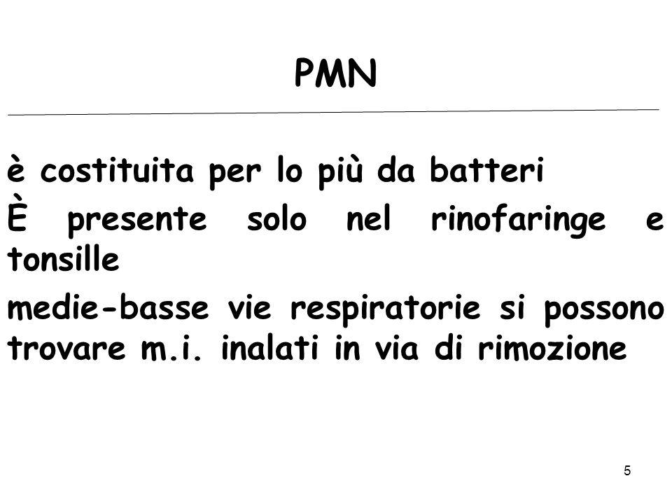 5 PMN è costituita per lo più da batteri È presente solo nel rinofaringe e tonsille medie-basse vie respiratorie si possono trovare m.i. inalati in vi