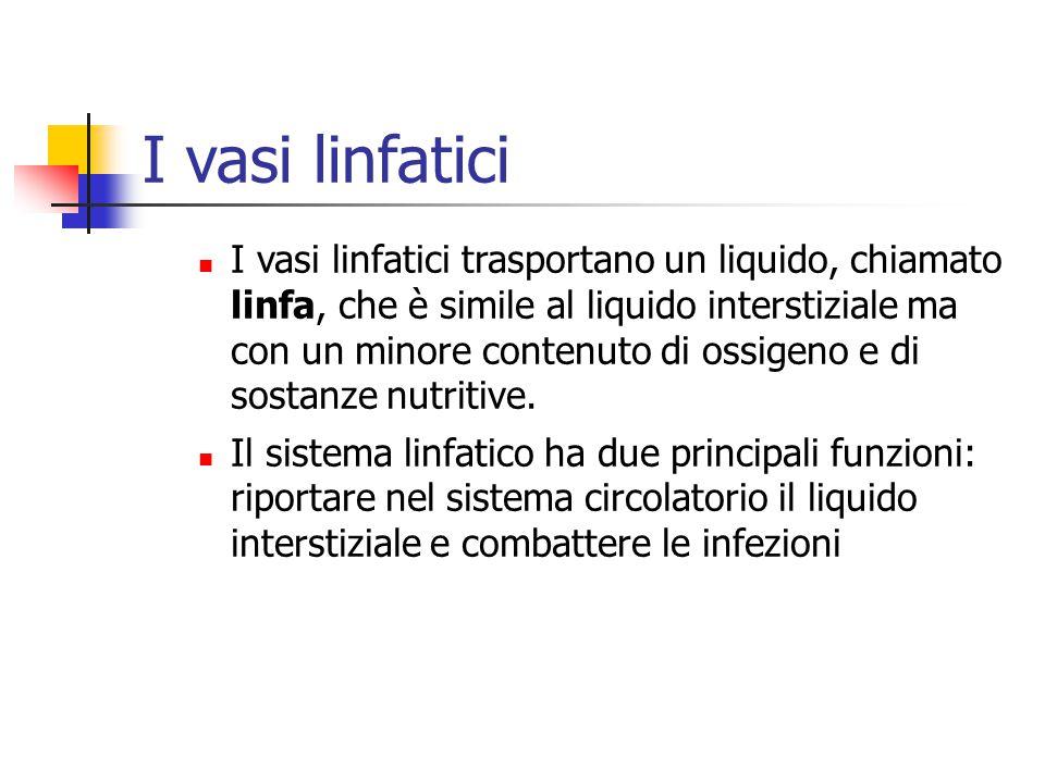I vasi linfatici I vasi linfatici trasportano un liquido, chiamato linfa, che è simile al liquido interstiziale ma con un minore contenuto di ossigeno e di sostanze nutritive.
