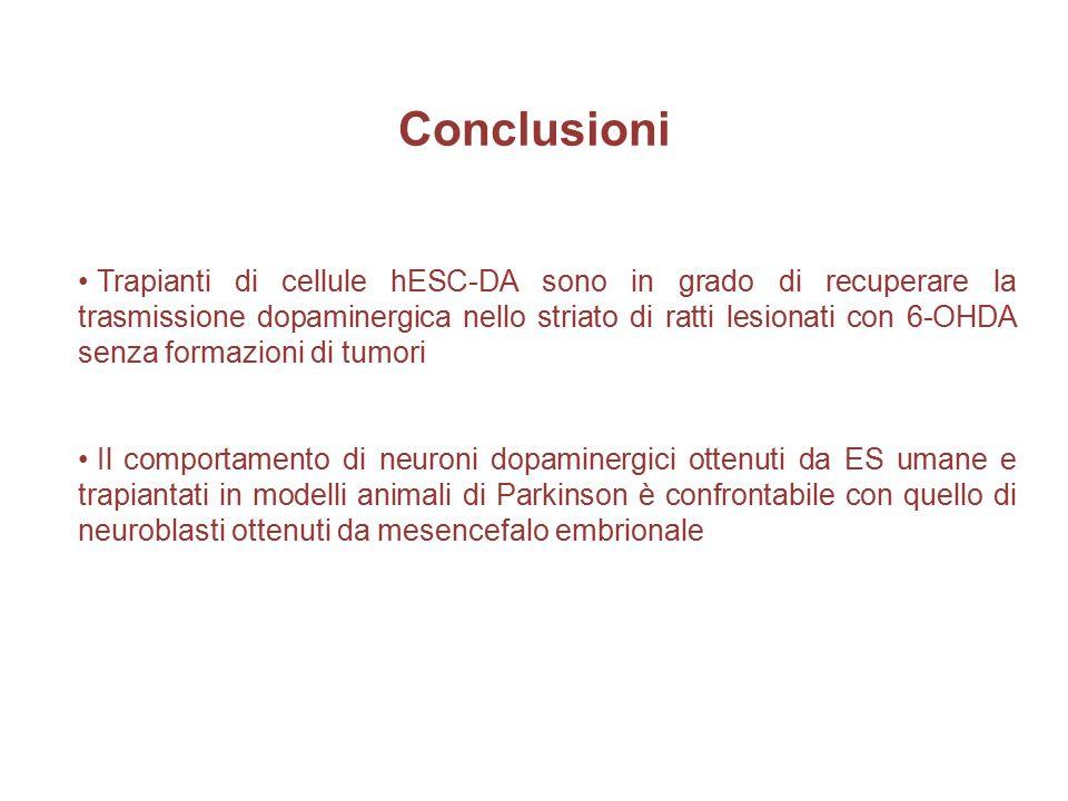 Conclusioni Trapianti di cellule hESC-DA sono in grado di recuperare la trasmissione dopaminergica nello striato di ratti lesionati con 6-OHDA senza f