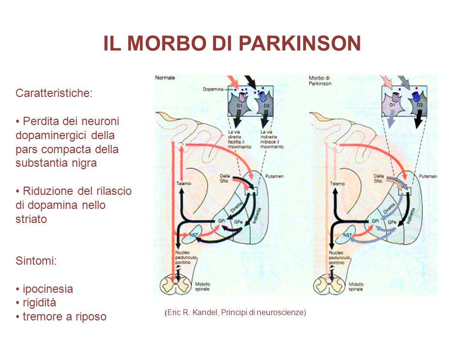 IL MORBO DI PARKINSON Caratteristiche: Perdita dei neuroni dopaminergici della pars compacta della substantia nigra Riduzione del rilascio di dopamina nello striato Sintomi: ipocinesia rigidità tremore a riposo ( Eric R.