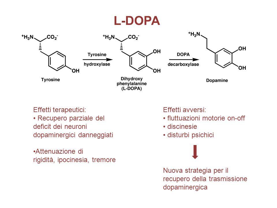 L-DOPA Effetti avversi: fluttuazioni motorie on-off discinesie disturbi psichici Effetti terapeutici: Recupero parziale del deficit dei neuroni dopaminergici danneggiati Attenuazione di rigidità, ipocinesia, tremore Nuova strategia per il recupero della trasmissione dopaminergica