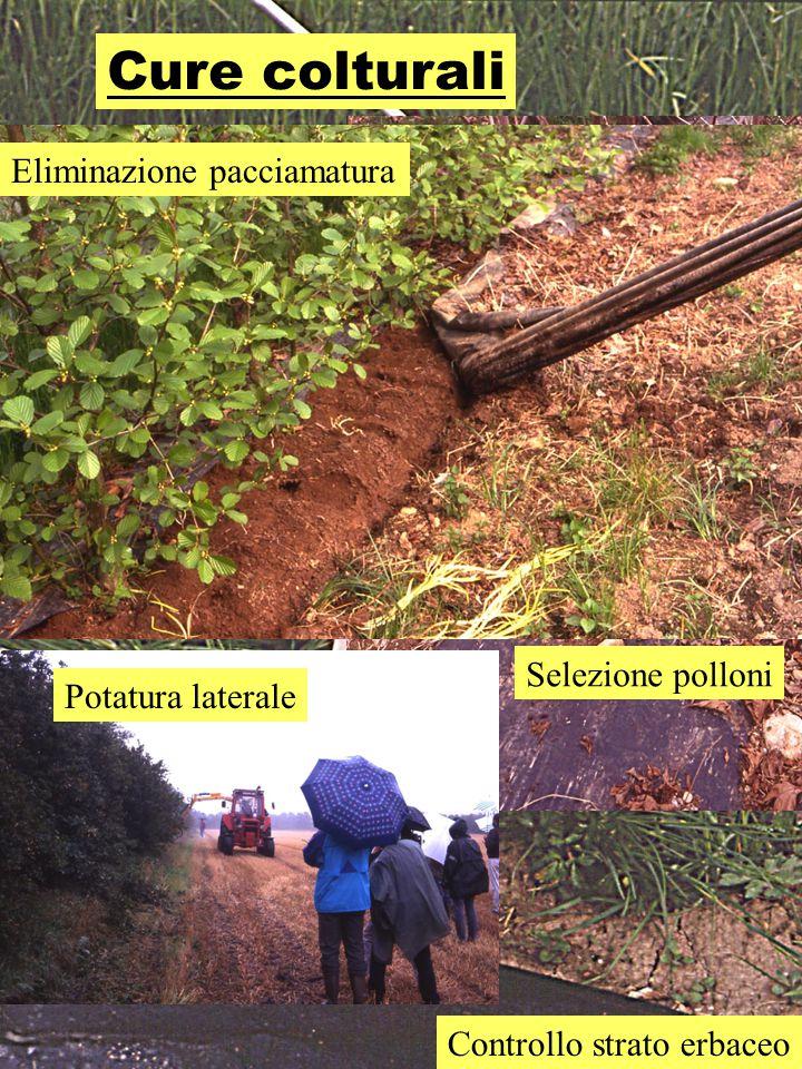 Cure colturali Selezione polloni Controllo strato erbaceo Potatura laterale Eliminazione pacciamatura
