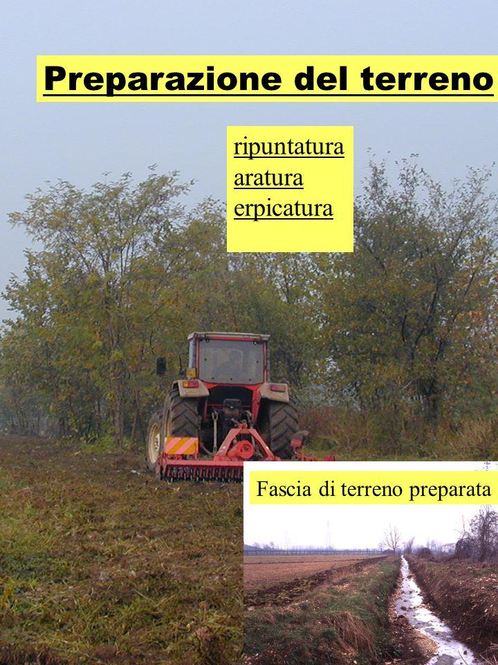 Preparazione del terreno ripuntatura aratura erpicatura Fascia di terreno preparata