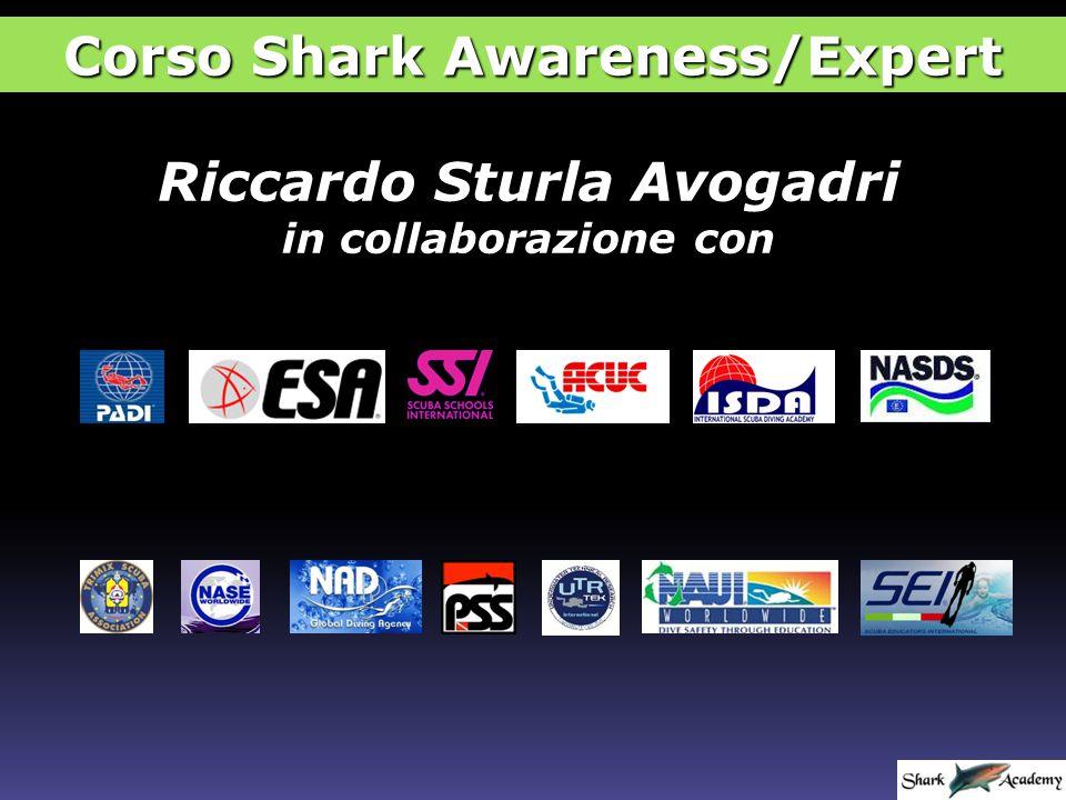 Brevetti di Shark Awareness Specialty NASETSA Corso Shark Awareness/Expert